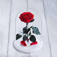 Стабилизированная роза в колбе Lerosh - Premium 33 см, Красная на белой подставке - 138962