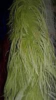 Перья страуса (перья марабу) двуниточные (перо длинное) цвет салатовый длина 185 см