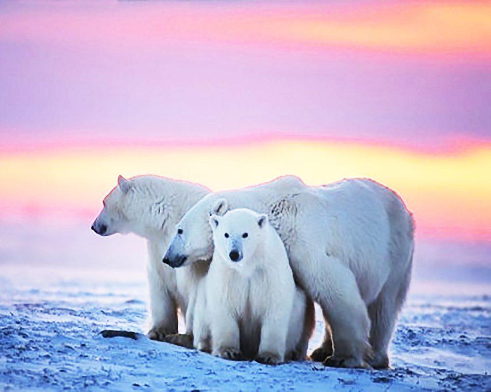 "Алмазная вышивка 50х40см - набор ""Белые медведи"""