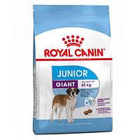 Корм для собак (Роял Канин) ROYAL CANIN Giant Junior 15 кг - для щенков собак гигантских пород от 8 месяцев