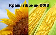 Кращі гібриди 2018 року - кукурудза та соняшник