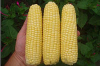 Семена кукурузы Леженд F1 (1 000г) сладкая