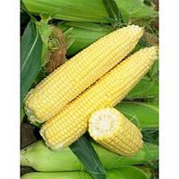 Семена кукурузы Лендмарк F1(1000г) сладкая, фото 1