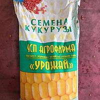 Семена кукурузы ДН ПИВИХА (ФАО  180)
