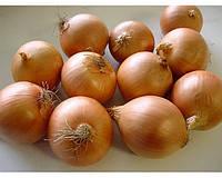 Семена лука Леон (250 000с) средний, фото 1