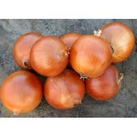 Семена лука Универсо F1(10000c) средний, фото 1