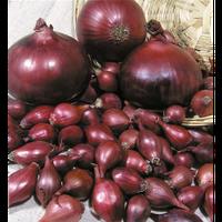 Семена лука Рэд Барон F1 (250 000с) красный средне-ранний, фото 1