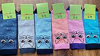 """Дитячі стрейчеві бавовняні шкарпетки""""LOMANI Україна"""",Cat face, фото 1"""