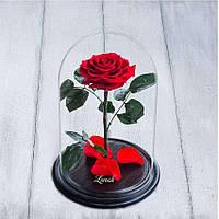 Стабилизированная роза в колбе Lerosh - Premium плюс 33 см, Красная