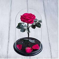 Стабилизированная роза в колбе Lerosh - Premium плюс 33 см, Малиновая