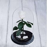 Стабилизированная роза в колбе Lerosh - Standart 33 см, Белая
