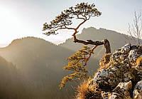 Фотообои готовые Дерево на скале размер 368 х 254 см
