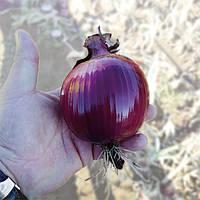 Семена лука КС 711 F1, Kitano 1 000 семян | профессиональные