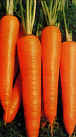 Семена моркови Вита Лонга (500г) тип флакке(25см) поздняя