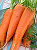 Семена моркови Канада F1(100000c)1,8-2,0мм тип Шантане