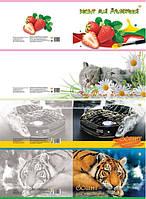 Альбом для рисования Тетрада А4 на скобе 120 г/м2 30 листов