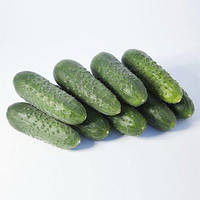 Огурец КС 70 F1 (KS 70 F1) 10 с Kitano Seeds