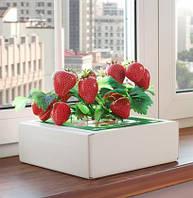 Чудо-ягодница «Домашняя грядка» для выращивания клубники в домашних условиях, фото 1