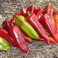 Семена перца КС 2458 F1, Kitano 100 семян