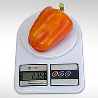 Семена перца КС 3115 F1, Kitano 1 000 семян | профессиональные