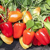 Семена перца КС 3115 F1, Kitano 500 семян | профессиональные