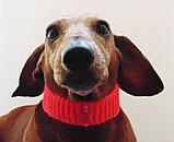 Вязанный ошейник для собаки или кота, фото 5