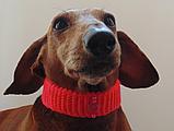 Вязанный ошейник для собаки или кота, фото 6
