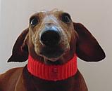 Вязанный ошейник для собаки или кота, фото 7
