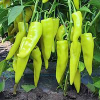 Семена горького перца Кампай F1, Kitano 100 семян   профессиональные, фото 1