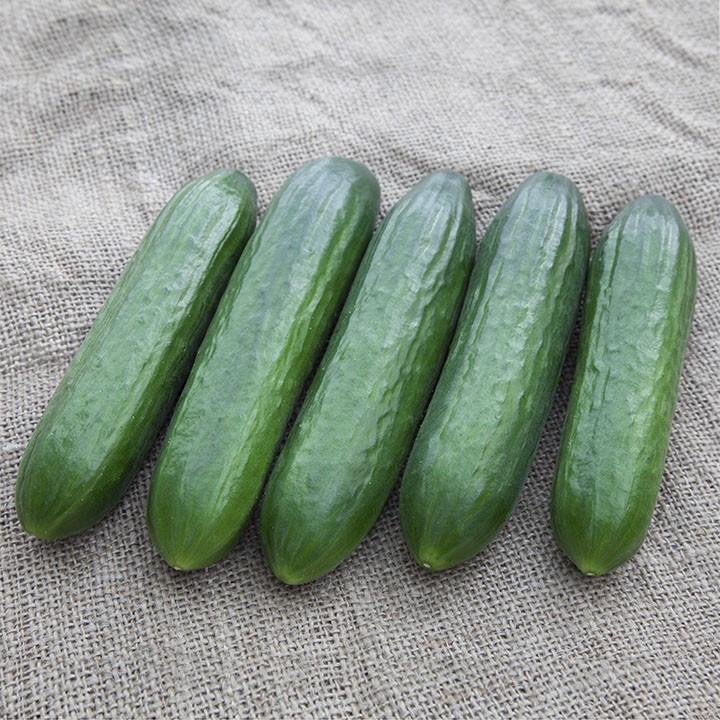Семена огурца КС 260 F1, Kitano 500 семян | профессиональные