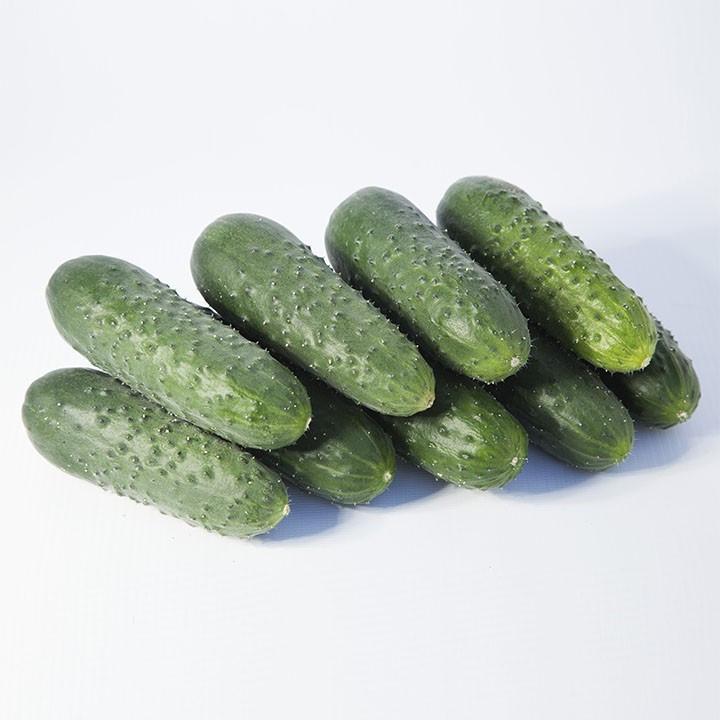 Семена огурца КС 70 F1, Kitano 500 семян | профессиональные