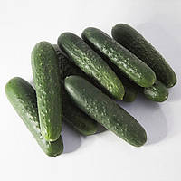 Семена огурца КС 80 F1, Kitano 1 000 семян   профессиональные