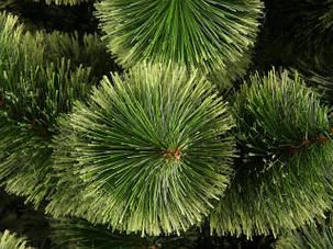 Сосна елка искусственная Пушистая 1,8м ель ели ёлка ёлки елка елки сосна штучна ялинка ялинки сосни, фото 2