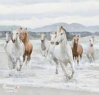 """Бесшовные фотообои """"Лошади"""""""