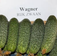 Семена огурца Вагнер F1(250c) партенокарпик ранний, фото 1