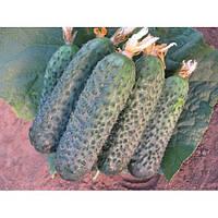 Семена огурца Директор F1 (500c) партенокарпик ранний, фото 1