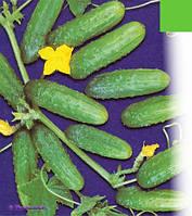 Семена огурца Гектор F1(1000с) пчелоопыляемый ультраранний, фото 1