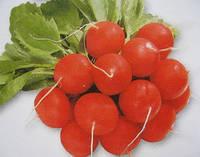 Семена редиса Сора (250г) ранний