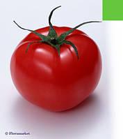 Семена томата Президент F1 (500c) высокорослый ранний, фото 1