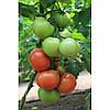 Семена томата Ралли F1(1000c) высокорослый ранний