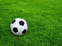 Семена газонной травы Спорт 500г