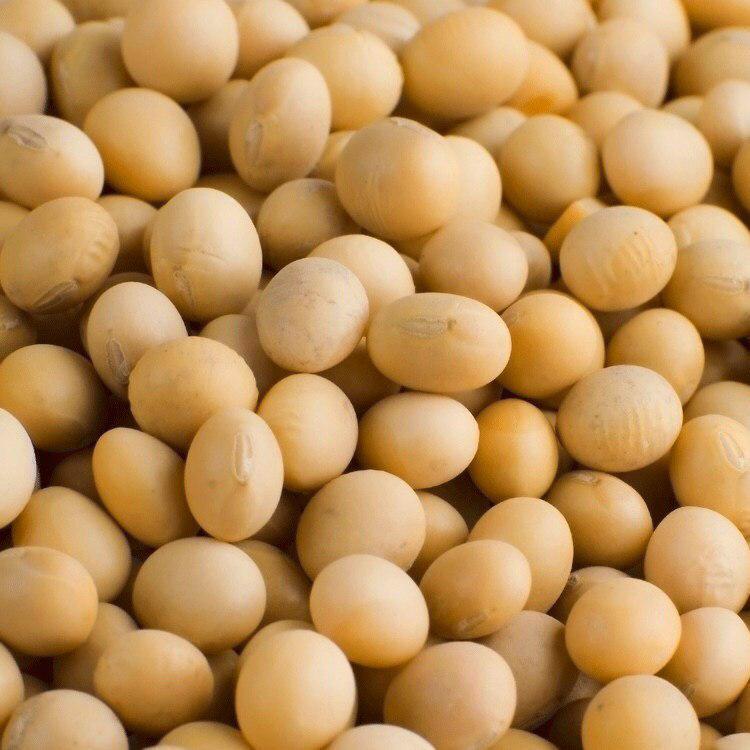 Семена сои Monsanto, Apollo