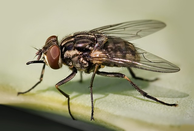 Обработка помещений от мух