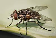 Обработка помещений от мух, фото 1