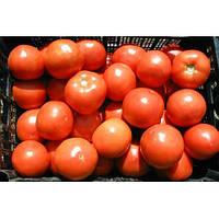 Семена томата Багира F1(5г) низкорослый ранний , фото 1