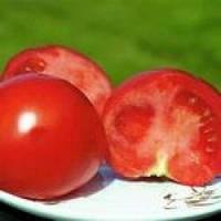 Семена томата Полбиг F1 (5г) низкорослый ранний, фото 1