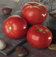 Семена томата Белла Роса F1 (1000c) низкорослый красный ранний, фото 1