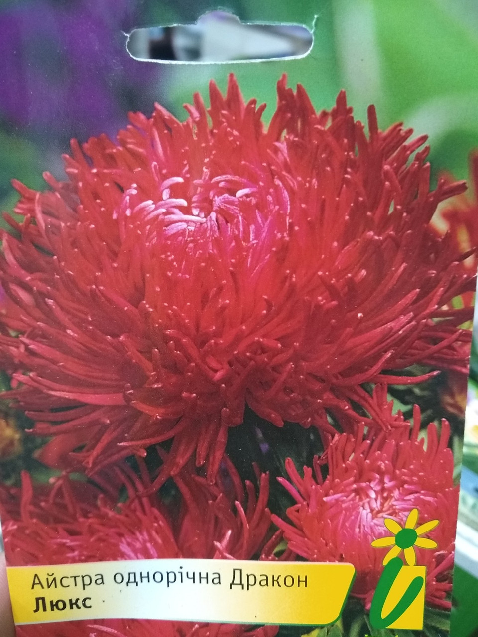 Насіння Астра китайська сортотип голчаста Дракон люкс червона насіння 10 грам в упаковці Україна