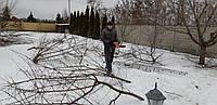 Обрезка деревьев,кронирование,спил веток,санитарная обработка