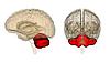 Стимуляция мозжечка влияет на деятельность лобных долей.
